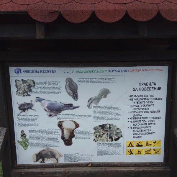 Rare Animals Sveti Vlas