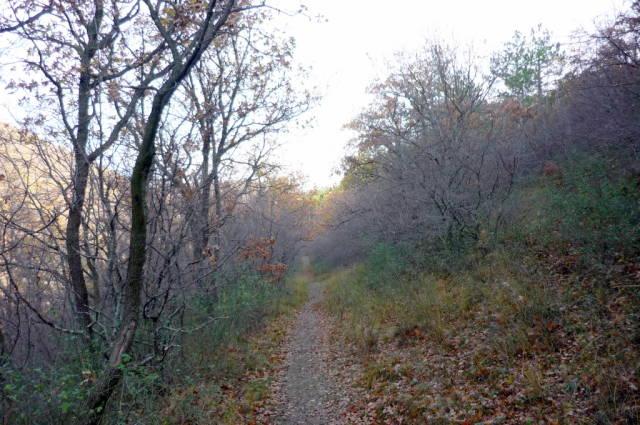 Vlas Eco Path